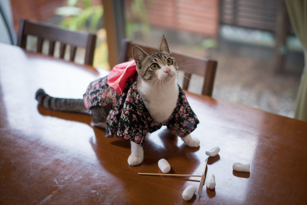 An unplanned natural light shot the morning after the kitty kimono shoot