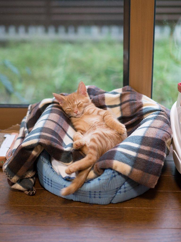 Sleepy afternoon