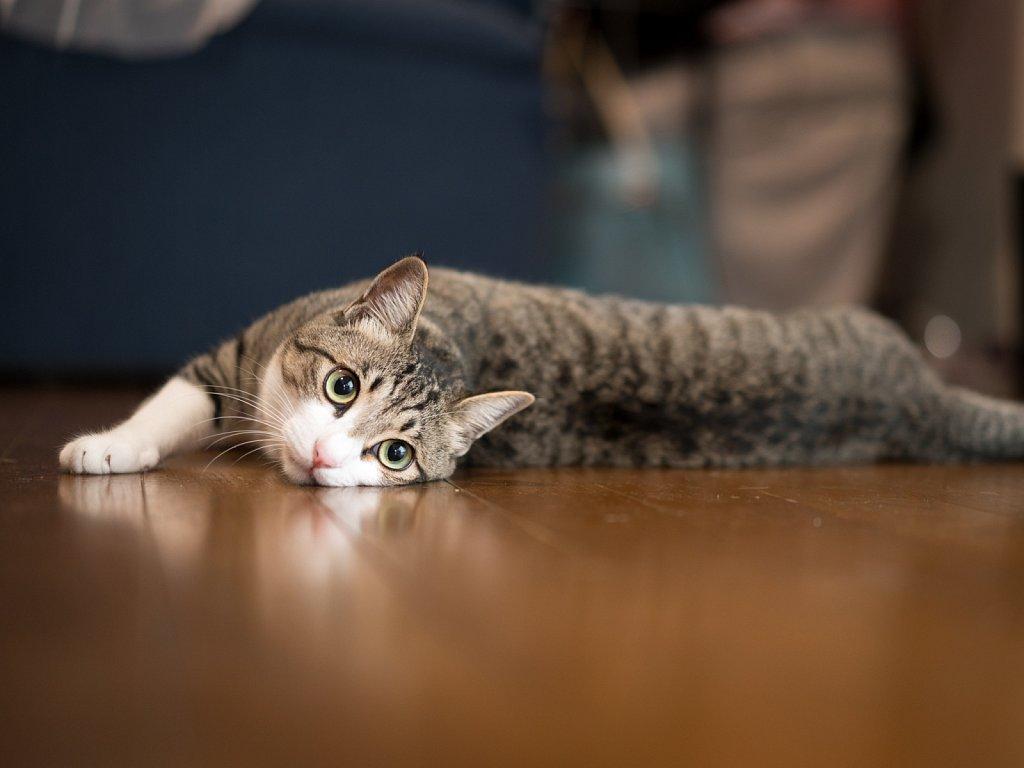 Katie thinks the floor is even cooler.