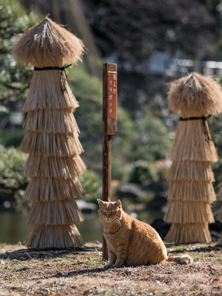 Cat guarding Hibiya Park
